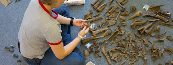There is a lot of variation in the size of animal bone to examine for possible refits, from small bones and splinters to much larger leg bones.