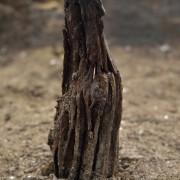 TimberUpright