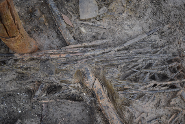 Close up of the flooring material. Notice the very thin diameter of the woven willow-like wood. This material would have been subjected to intense heat and very little seems to have survived across the site.