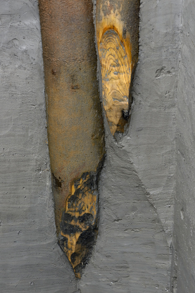 Image of the tips of two ash posts from the palisade. The working of the post tips often reflects the shape created where a coppiced tree shoot grows from a stump.