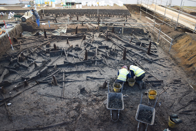 An image from early on in the excavation showing some of the wood mass. The sheer quantity of wood needed for the settlement would have required careful planning and resource management