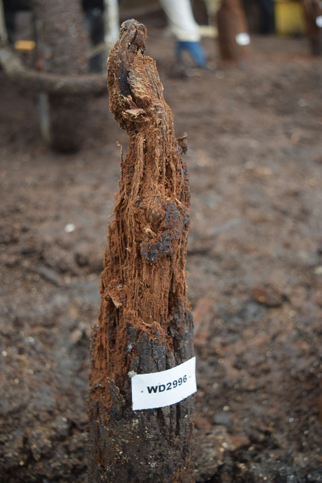 Image of a post tip showing some of the decay that has occurred in the area within the palisade to the west where the water table has fluctuated.